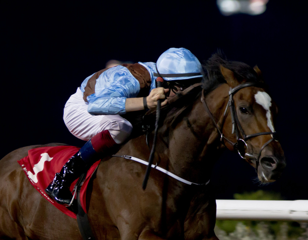 Hit It A Bomb is poised to return to the racecourse. Photo: Racing Post