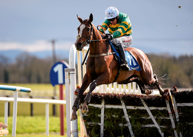 Jer's Girl, a Grade One winner, is among the entries due to run this weekend in Ireland. Pic: Sportsfile