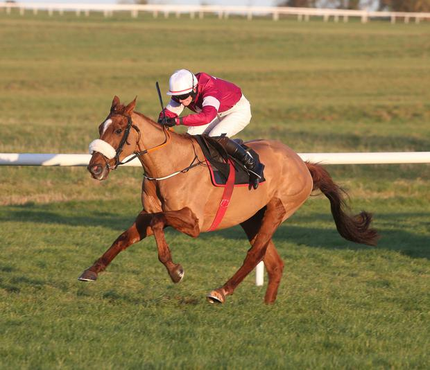 Bryan Cooper was supposed to partner Woods Well at Fairyhouse. Pic: racingpost.com/pics