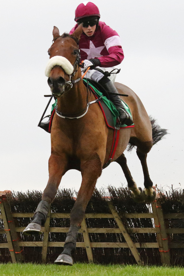 Death Duty is described by Gordon Elliott as the best novice hurdler in his ranks