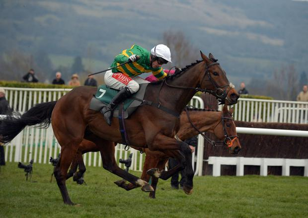 It will be interesting to see how Minella Rocco fares at Leopardstown on Sunday. Pic: racingpost.com