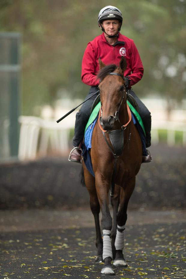 Postponed looking relaxed and well in Meydan. Pic: racingpost.com