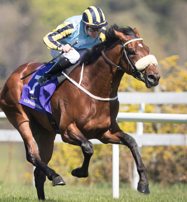 Irishcorrespondent will carry Mick Halford's hopes in the Irish 2,000 Guineas at the Curragh on Saturday. Pic: racingpost.com