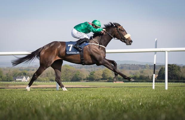 Rehana wants it to be quick at Naas. Pic: racingpost.com
