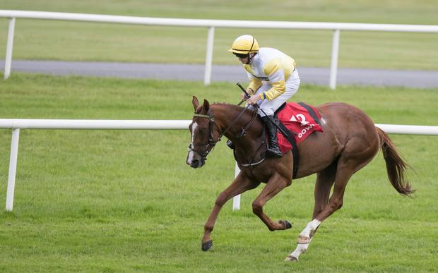 Quiet Company only Niall Cronin has a 5lb hike to defy. Pic: racingpost.com