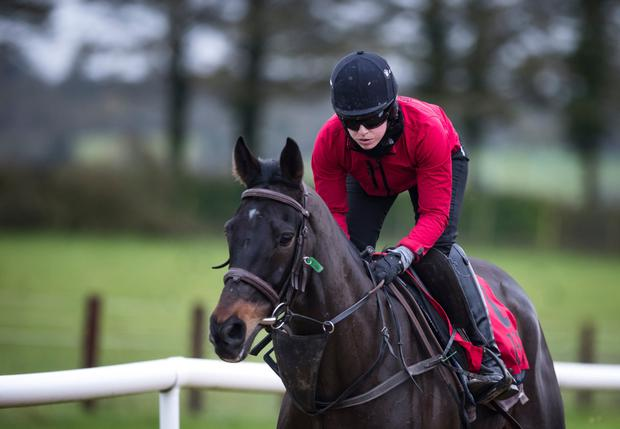 Gold Cup winner Sizing John, with Kate Harrington, on the gallops at Commonstown Stables. Photo: Racing Post