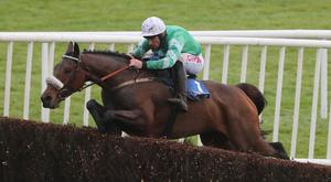 Despite his new rating, Presenting Percy will not be going amongst Grade One company in his next race. Pic: racingpost.com