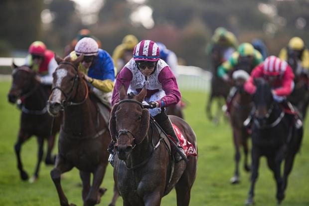 FORMIDABLE: Invincible Queen can score for trainer Mark Fahey. Photo: racingpost.com