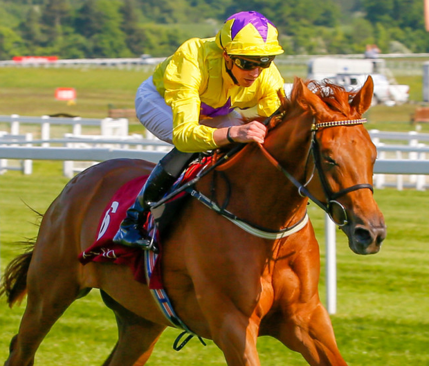 Classy lady: Sea Of Class can land the Darley Irish Oaks