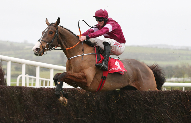 KHAN DO: Menghli Khan is an odds-on favourite. Photo: carolinenorris.ie