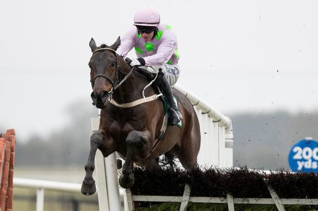 GRADE ONE: Getabird is running at Limerick today. Photo: Racing Post