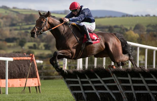 IMPRESSIVE: Slippery Serpent and Paul Townend winning Winter Warmer Bundle Handicap Hurdle at Punchestown last October. Photo: racingpost.com