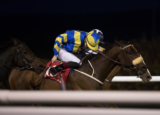 HAPPY HUNTING GROUND: Ahlan Bil Zain is used to winning at Dundalk. Photo: racingpost.com