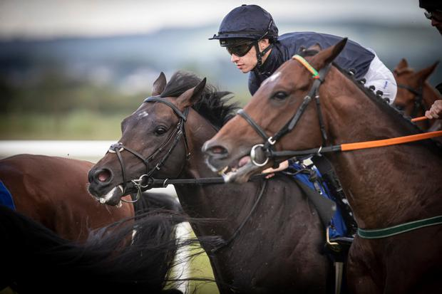 ROYAL DECREE: Royal Aide and Donncha O'Brien. Pic: Racing Post