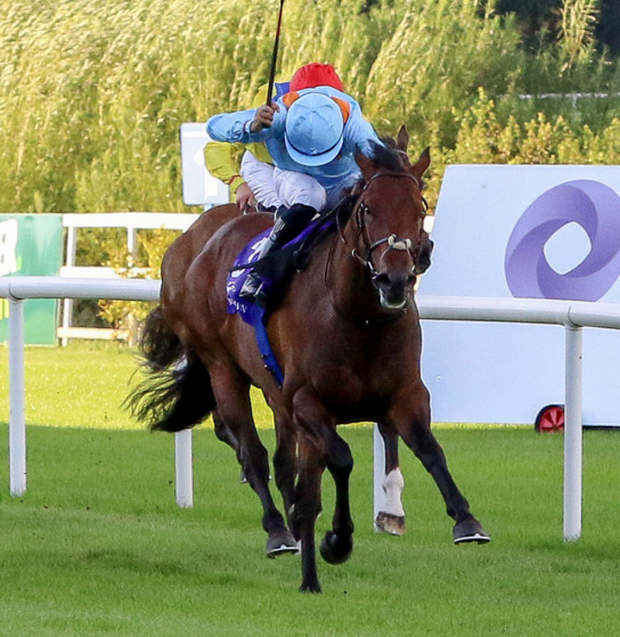 Ice Cold In Alex can score at the Curragh