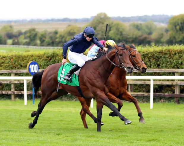 GOOD START: Yale can take the opening maiden with Donncha O'Brien. Pic: RacingPost.com