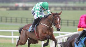 UP AND OVER: Tornado Flyer should have the class to come good at Navan. Photo: racingpost.com
