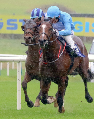 WAR CRY: Wargrave has the necessary race fitness for tomorrow's assignment Pic: racingpost.com