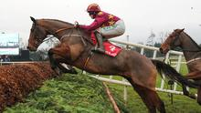 Minella Indo will relish the step up to three miles at Navan today