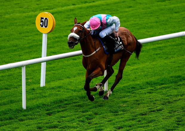 CENTRE STAGE: Centroid, with Gavin Ryan up, on their way to winning the Easyfix Handicap
