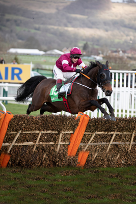 Apple's Jadeset a blistering pace during her final race at Cheltenham yesterday