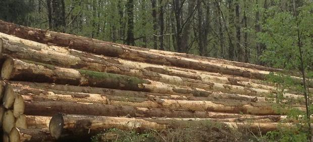 At clearfell an acre of quality timber is making €6,000 - €8,000 at current prices.