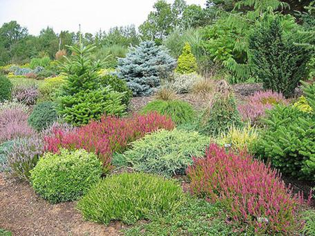Heathers and dwarf conifers for Garden design kerry