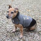 "Pete's dog Kiko wearing a calming ""Thunder shirt"""