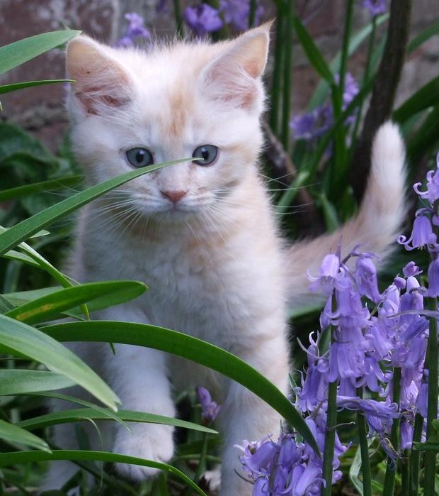 Heres Ten Reasons Why Young Kittens Are So Cute