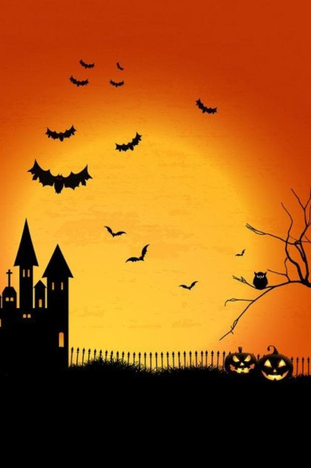 Bats are associated with Halloween but there is nothing scary, spooky or evil about these amazing little creatures.