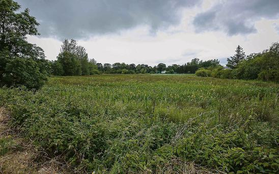 The tract of land behind the houses in Cloonbeg where it is proposed to create wildlife ponds and develop flora and fauna.