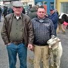 Attending the recent horse fair at Listowel were Jimmy Fitzgerald, Lisselton and Tom Doyle, Six Crosses