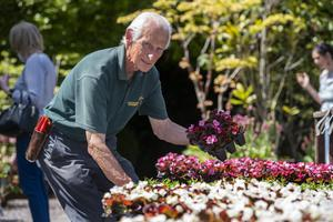 Don Nolan working on the displays of flowers at Liscahane Nursery and Garden Centre between Tralee and Ardfert on Tuesday. Photo by Domnick Walsh