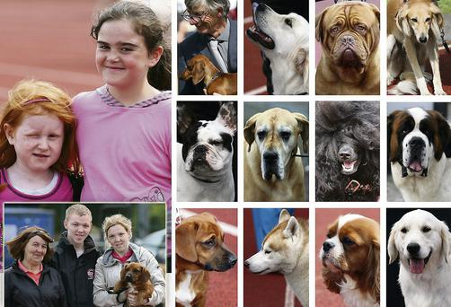 Brodericks and O'Connors and an array of faces at the annual Tralee and District Cannine Club Show at An Riocht AC at last year's event. This year's show will return to the same venue on this Saturday morning from dawn 'til evening. Photos by John Reidy