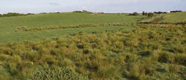 Mixed fortunes: Pasture in 'good agricultural and environmental condition' fits the bill, but the rushy scrubland will lead to penalties under the Cross Compliance scheme.