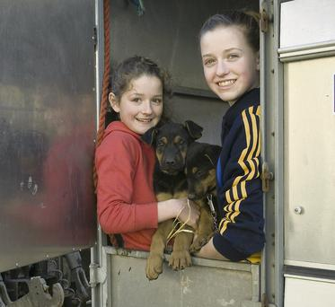 Sisters Denise and Maeve Carmody with some of their Doberman puppies that they were selling at the Glin Fair.