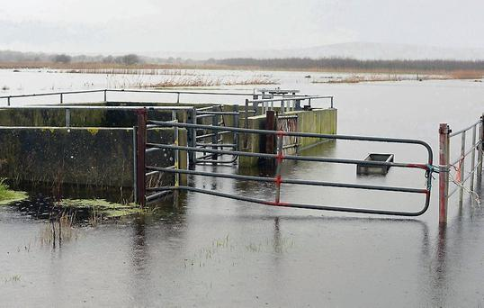 Still under water: Farm lands close to the Ballynagare Bridge are under several feet of water.