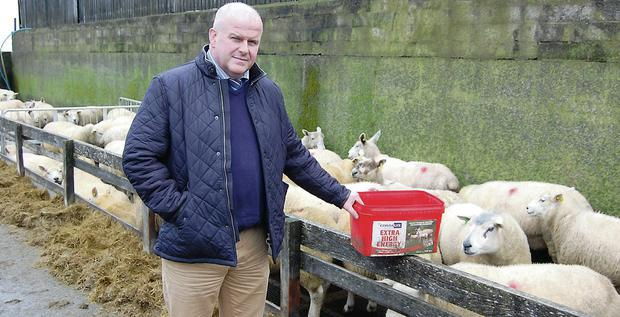 Caltech's David Morgan who will chair the sheep meeting in Tralee on Tuesday, January 28.