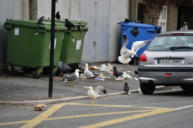 Seagulls and crows flock around bags of rubbish that was left near commercial bins in the Abbey Car Park in Tralee in the last week