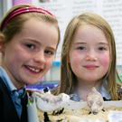 Keira Nolan, Aoife Behan and Lauren Knight from Killahan NS with their project on sanderlings at last year's Science Fair