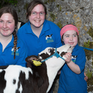 Noreen and Marion Kennelly and Clodagh Kennelly-McIneney getting their calves ready for the Kingdom County Fair Show at Ballybeggan Racecourse in Tralee on Sunday