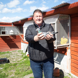 Tralee pigeon fancier Jimmy Quilligan is celebrating after six birds he trained earned a spot in the sport's record books by finishing 1st, 2nd, 3rd, 4th 5th and 8th in a race this month. Photo Joe Hanley