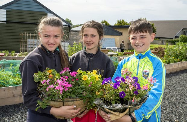 Ava Kennelly, Chloe Mannix and Jeremiah Murphy, all fifth class pupils in Ballyduff NS, pictured lending a helping hand to the Ballduff Men's Shed last week. All photos by Domnick Walsh