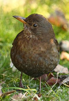 But there was a lift to the day when a blackbird began tapping on a window to wake up to the chills of May.