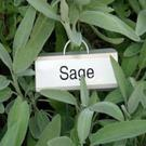 Sage can help tackle hot flushes and night sweats