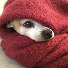 Simple blankets are an effective way of keeping pets warm