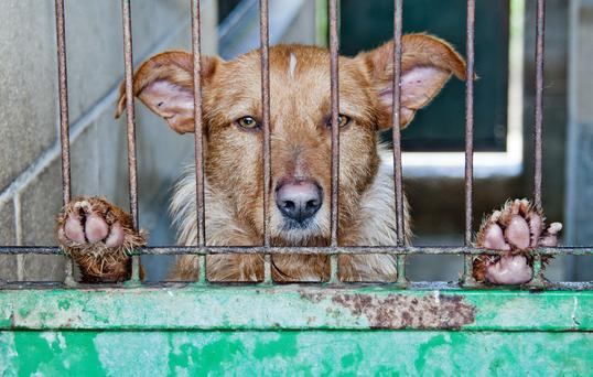 Dog breeding needs to be regulated by government