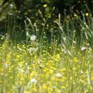There are a number of natural antihistamines that you could consider if you suffer from hay fever