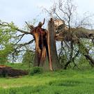 If you have damage to a large tree you may have to call in a professional tree surgeon