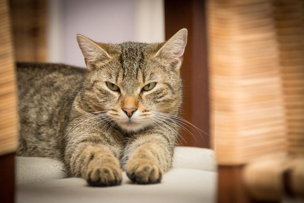 Anxious owners are more likely to have anxious pets